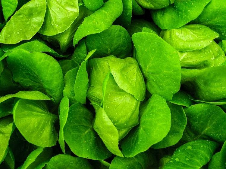 les feuilles vertes riches en magnesium