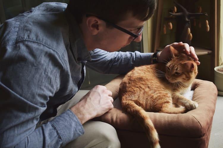 le chat et le vétérinaire