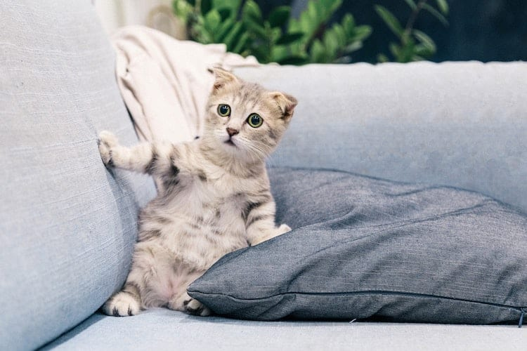 le petit chaton